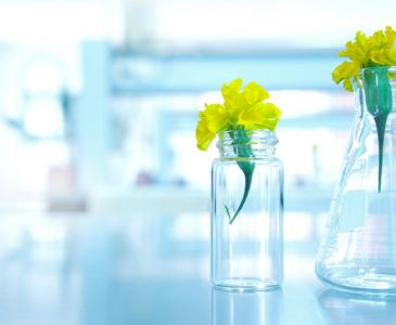 biology-yellow-flower